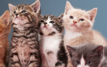 Securing Social Media Privacy… with Cats